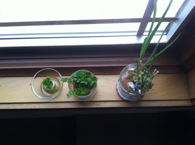 Trial Veggie Growing
