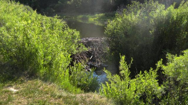 Coyote Creek Dam