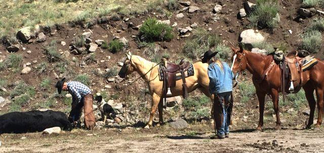 Bristol Head Cowgirl