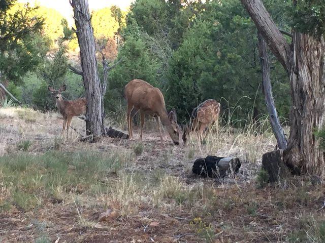 Deer at breakfast